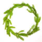 Green fresh spruce frame Royalty Free Stock Photo