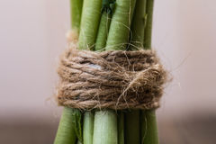 Green fresh stalks Royalty Free Stock Photo