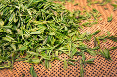 Green fresh tea leaves. In a basket Royalty Free Stock Images
