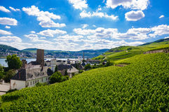 Green fresh vineyard near Ruedesheim, Rheinland. Green fresh vineyard near Ruedesheim in Rheinland-Pfalz, Germany Stock Photography