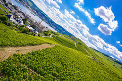 Green fresh vineyard near Ruedesheim, Rheinland. Green fresh vineyard near Ruedesheim in Rheinland-Pfalz, Germany Stock Images