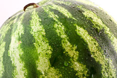 Green fresh watermelon on white Royalty Free Stock Photography