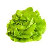 Green freshly picked salad Stock Photo