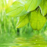 Green freshness Royalty Free Stock Photos