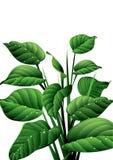 Green freshness. Morning dew drops on fresh leaves Stock Image