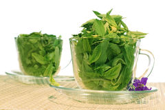 Green freshness Royalty Free Stock Images