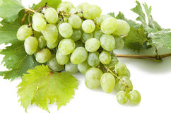 Green freshness grape stock photography