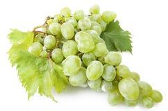 Green freshness grape royalty free stock photo