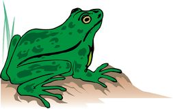 Green Frog. A green frog illustration Royalty Free Stock Photos