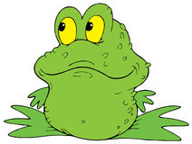 Green Frog. Vector clip-art / children's book illustration for your design Royalty Free Stock Image