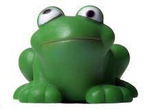 Green frog. Sitting frog royalty free stock photos