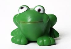 Green frog. Happy green frog stock image