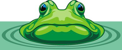Green frog Royalty Free Stock Photo