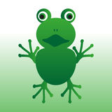 green frog animal looks at you Royalty Free Stock Photos