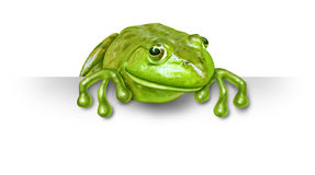Green frog with a blank sign Royalty Free Stock Photography