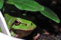 Green frog camera Royalty Free Stock Photo
