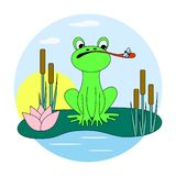 Green frog catches a fly on the pond. Vector illustration stock illustration