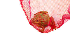 Green frog caught in a net, captured. Isolated white background. royalty free stock photos