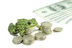 Green frog with coins and banknotes Stock Photography