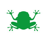 Green frog in flat style. Vector Illustration Royalty Free Stock Image
