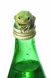 Green Frog on Green Bottle. Green Treefrog resting on a glass water bottle.  Conveys themes of freshness, purity, Earth and ecology Stock Photo