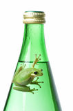 Green Frog on Green Bottle. Green Treefrog resting on a glass water bottle.  Conveys themes of freshness, purity, Earth and ecology Stock Photos