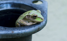 Green Frog on Grey Metal Container Stock Images