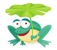 Green frog holding leaf Royalty Free Stock Image