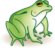 Green frog. Illustration of green frog in vector Royalty Free Stock Photo