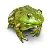 Green Frog isolated. On white Stock Photography