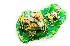 Green frog- jewelry box. Royalty Free Stock Images