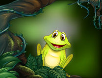 A green frog in the jungle Stock Images
