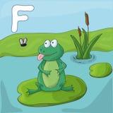 Green frog on a lake. Childrens illustrated alphabet. Letter F . vector illustration