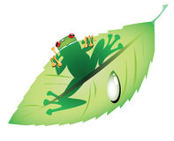 Green frog on a leaf Royalty Free Stock Images