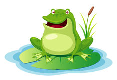 Green frog on a leaf pond Royalty Free Stock Photos