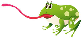 Green frog with long tongue. Illustration Royalty Free Stock Image