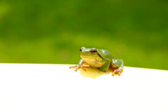 Green Frog Note Stock Photos