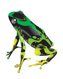 Green frog with pimples Royalty Free Stock Photography