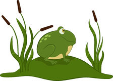 Green frog. Green frog sitting on the grass royalty free illustration