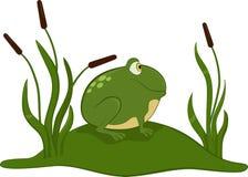 Green frog. Royalty Free Stock Photos
