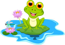 Free Green Frog Sitting On A Leaf Royalty Free Stock Photo - 69216575