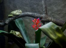 Green Frog sleep on a branch and green leaf next to red flower royalty free stock image