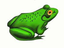 Green frog toad on a white background. stock image