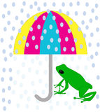 Green frog under umbrella Royalty Free Stock Image