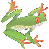 Green frog vector art Stock Photos
