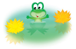 Green frog and water lily Stock Photos