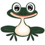 Green frog on white Royalty Free Stock Images
