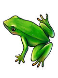 Green frog on white background. Green frog with thick black contour isolated on white background. Digital art Royalty Free Stock Photography