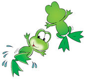 Green frogs Stock Images