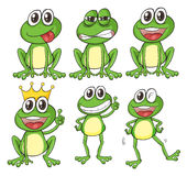 Green frogs Stock Image